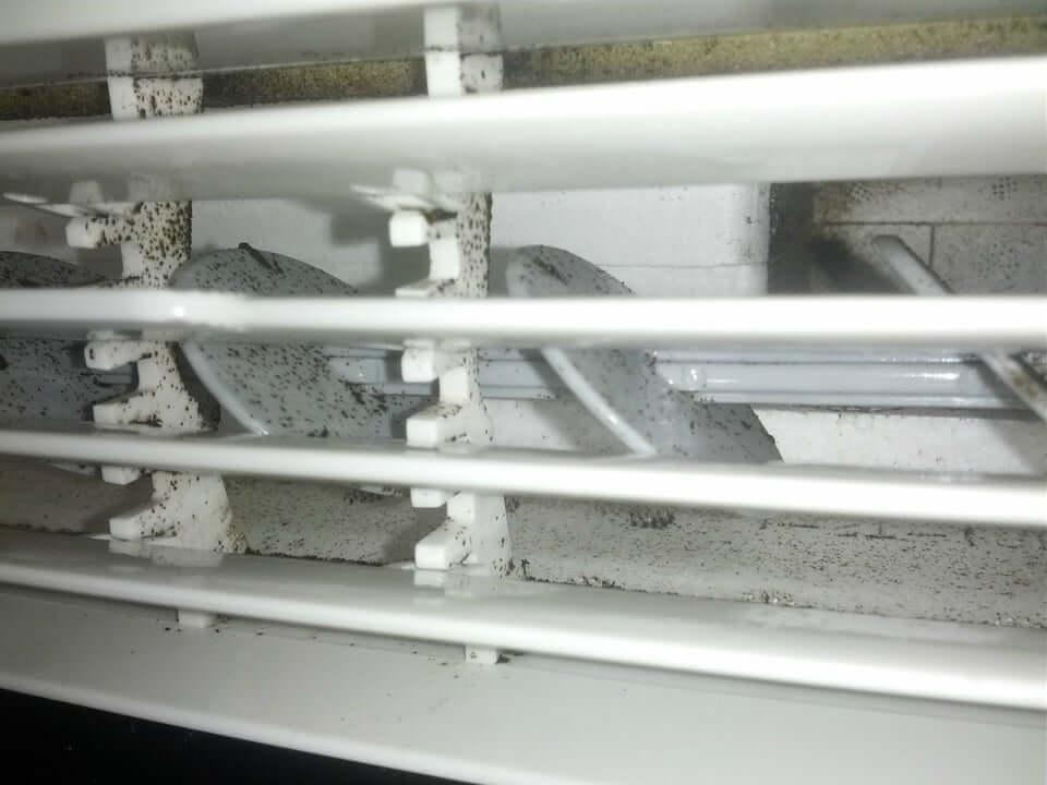 mold in my window ac