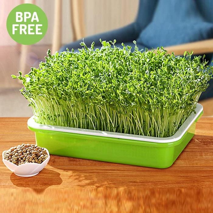 Best Microgreen Growing Trays