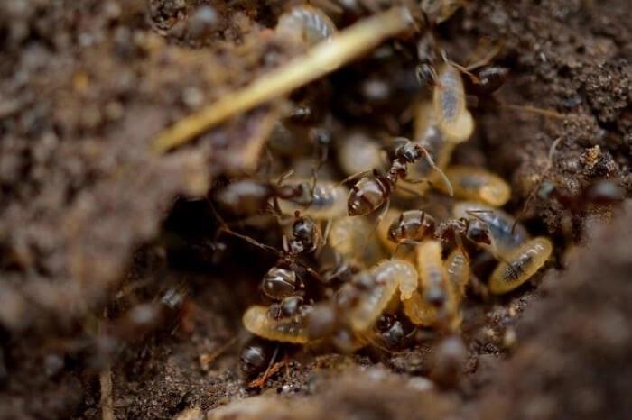 Termite Bait Stations vs. Liquid Treatment
